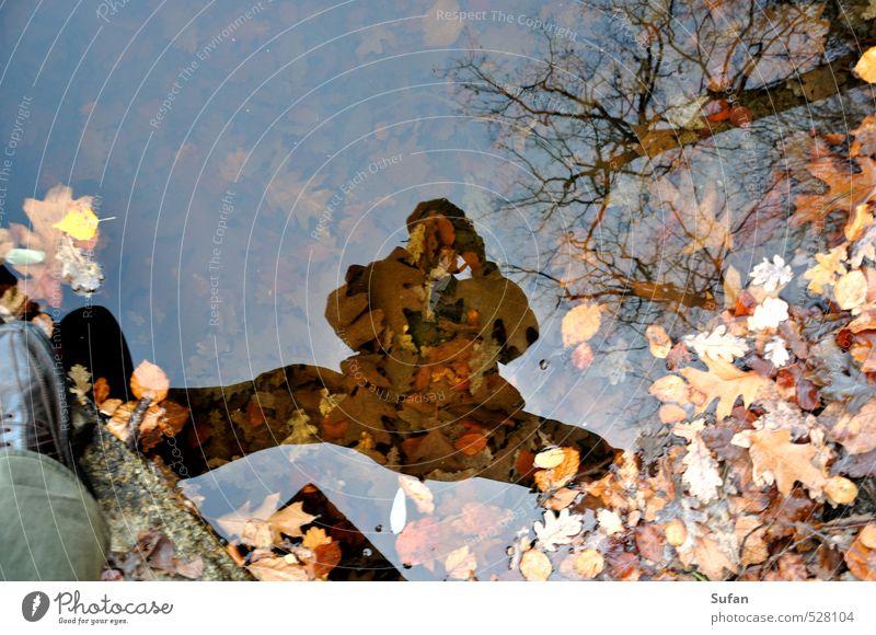 Herbstspiegel Mensch Natur Mann Wasser Pflanze Baum Erholung Blatt Wald Erwachsene gelb Senior Herbst grau braun maskulin