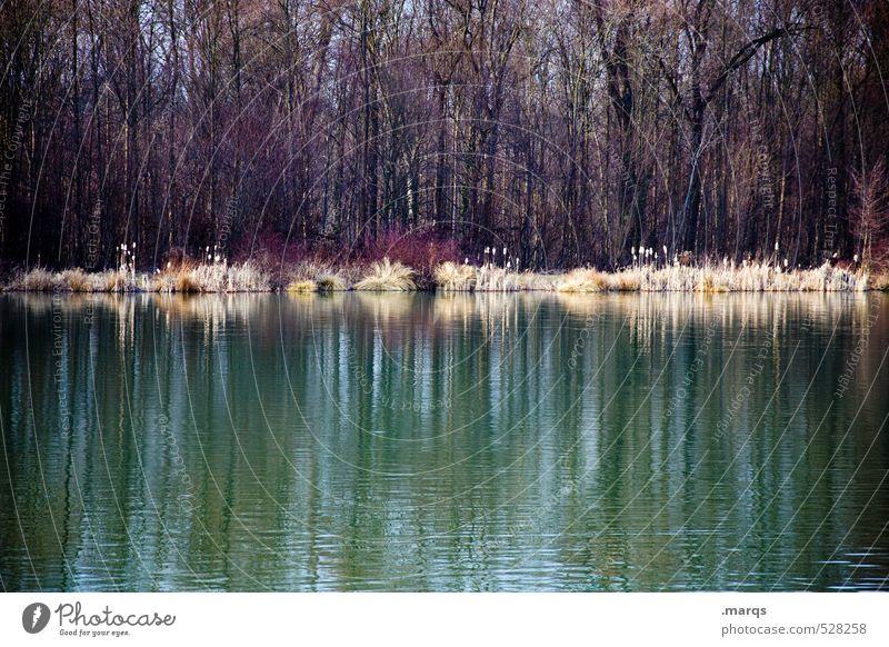 Am See Natur schön Landschaft Wald kalt Herbst Stimmung trist ästhetisch Ausflug einfach Seeufer