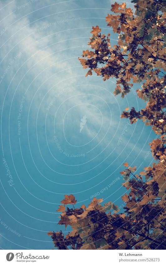 Sommer? Umwelt Natur Landschaft Pflanze Himmel Herbst Schönes Wetter Baum blau braun gelb Farbfoto Außenaufnahme Menschenleer Tag
