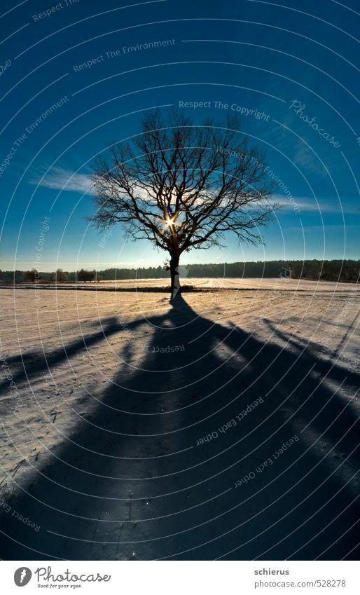 Winterlandschaft mit Baum im Gegenlicht Schnee Umwelt Natur Landschaft Pflanze Himmel Sonne Sonnenlicht Schönes Wetter Feld träumen kalt blau Kraft Farbfoto