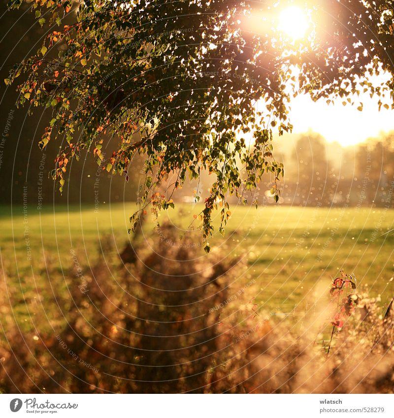 Oktobersonne Umwelt Natur Landschaft Herbst Schönes Wetter Wind Baum Sträucher Erholung Ferien & Urlaub & Reisen Horizont Stimmung Farbfoto Außenaufnahme Abend