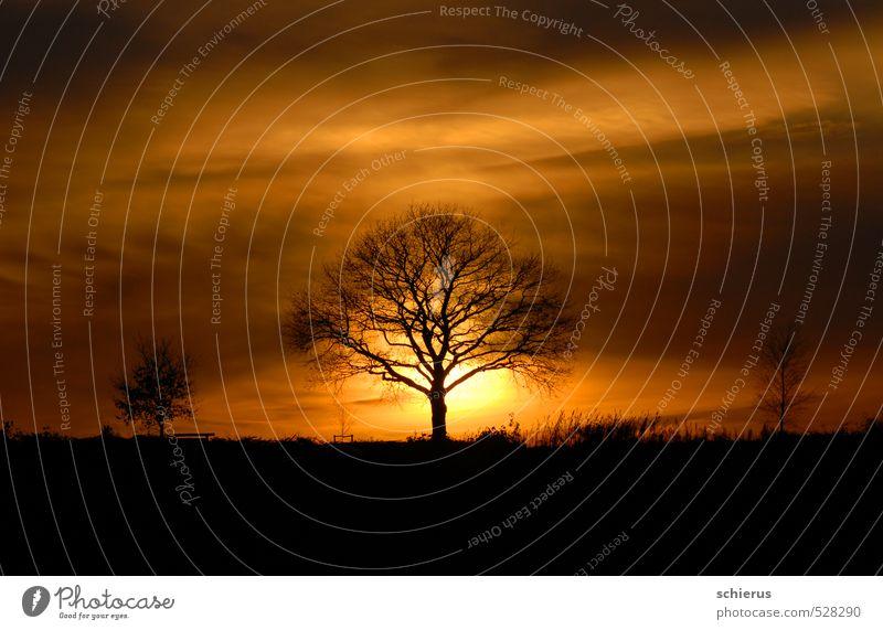 Baum im Sonnenuntergang Umwelt Natur Landschaft Pflanze Himmel Sonnenaufgang Sonnenlicht Herbst Winter Schönes Wetter Feld Gefühle Stimmung Geborgenheit