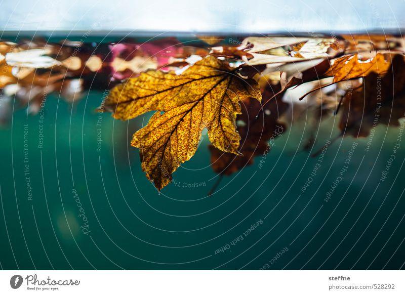 Aus aktuellem Anlass Herbst Wetter Regen Blatt schön nass Herbstlaub herbstlich Herbstfärbung Herbstwetter Farbfoto Unterwasseraufnahme