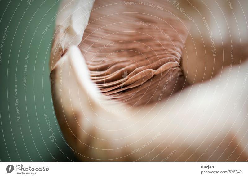 Olle Lamelle Umwelt Pilz Champignons bizarr einzigartig Zutaten braun beige grün Detailaufnahme Makroaufnahme lecker Heimat Waldpflanze Gemüse Farbfoto