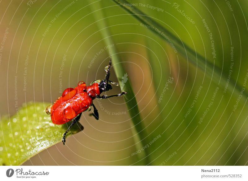 Flucht aus der Gießzone Umwelt Natur Pflanze Luft Wasser Wassertropfen Schönes Wetter Gras Sträucher Blatt Garten Park Wiese Käfer 1 Tier krabbeln schaukeln