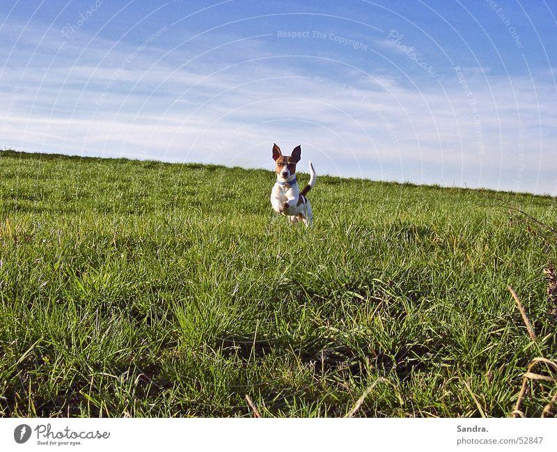 Abgehoben? Himmel Wiese springen Hund laufen rennen