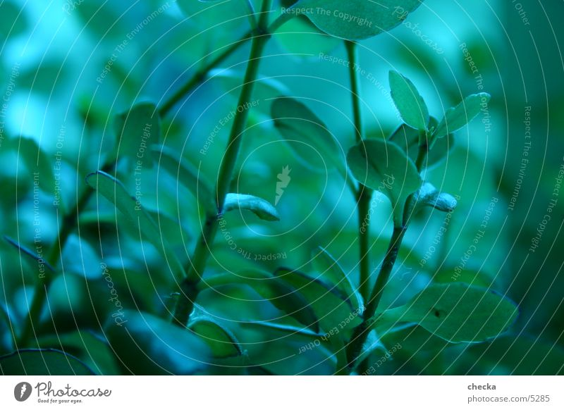 grünzeug grün blau Pflanze Makroaufnahme