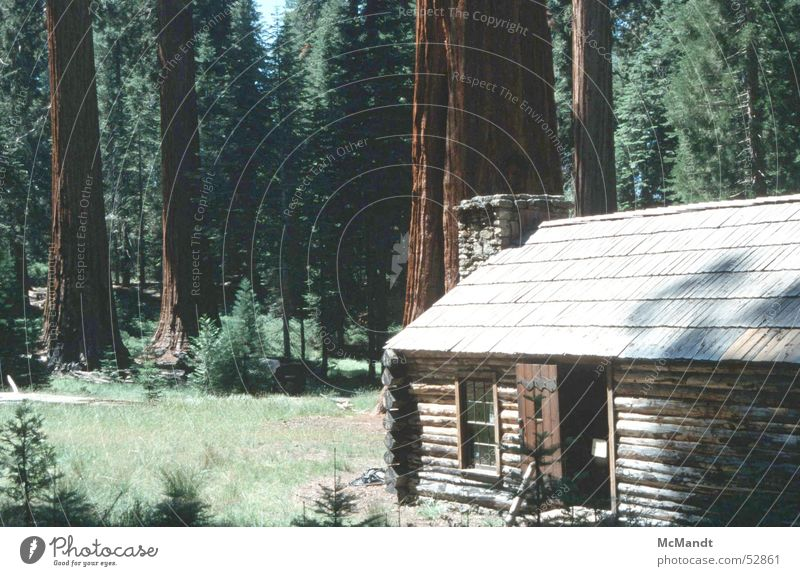 Yosemite Baum Haus Wald Kraft Kraft USA Kalifornien Nationalpark Holzhaus Yosemite NP Riesenbaum