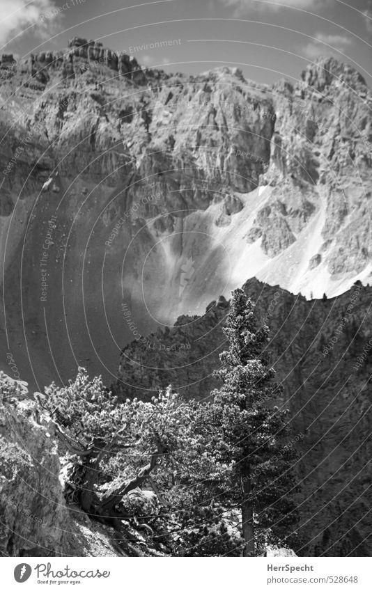Hochalpin Natur Ferien & Urlaub & Reisen Baum Landschaft Umwelt Berge u. Gebirge grau natürlich Felsen wild Tourismus wandern Ausflug ästhetisch Gipfel Alpen