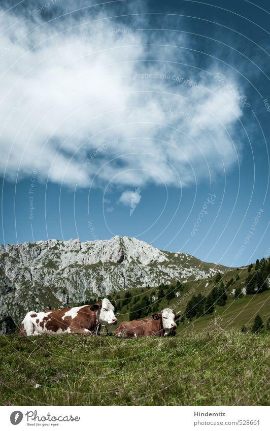 Qüe und Berge –typisch Bayern Himmel Ferien & Urlaub & Reisen blau grün weiß Sommer Baum Erholung ruhig Wolken Tier Wald Berge u. Gebirge Wiese grau Essen