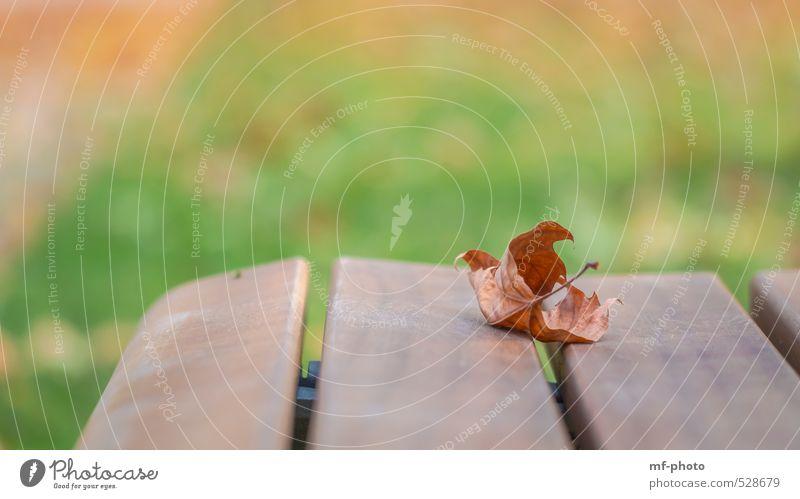 Herbstlaub... Natur Landschaft Pflanze Baum Blatt Garten Park braun grün orange Parkbank Farbfoto Menschenleer Tag