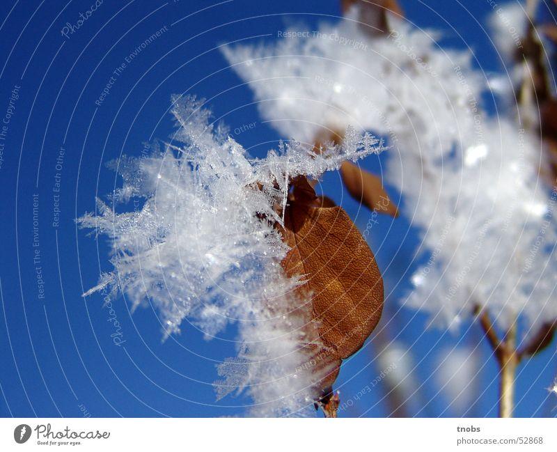 schön hier zu leben Natur Blume Winter Blatt Schnee Eis traumhaft