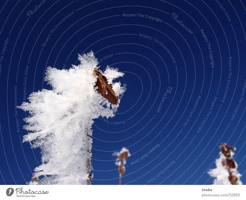 schön hier zu leben (Teil II) Blume Schneelandschaft kalt Winter Eis Landschaft kristal Frost Natur