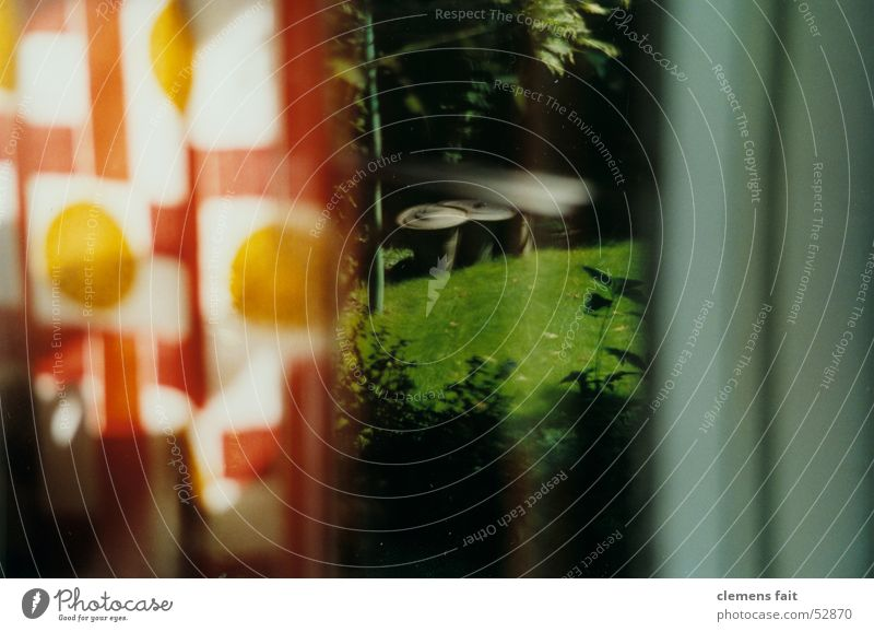 kurzer_blick_durchs_fenster grün rot dunkel Fenster grau orange Rasen Sträucher nah Rahmen Fass Fensterrahmen