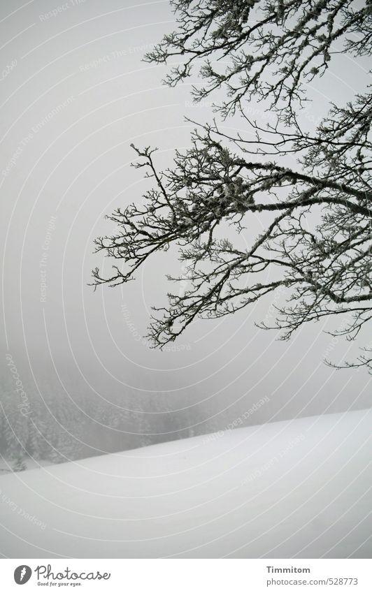 So wie früher. Natur weiß Pflanze Baum Landschaft Winter schwarz Wald Schnee grau natürlich Nebel Ast Hügel kahl schlechtes Wetter