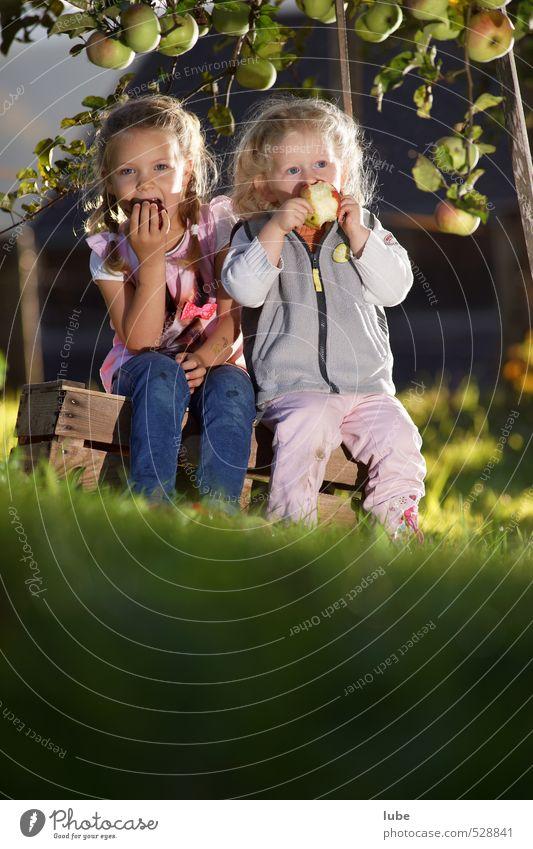 Apfelernte Mensch Kind Natur Mädchen feminin Herbst Gesunde Ernährung Essen Gesundheit Garten Lebensmittel Frucht Kindheit Appetit & Hunger Kleinkind