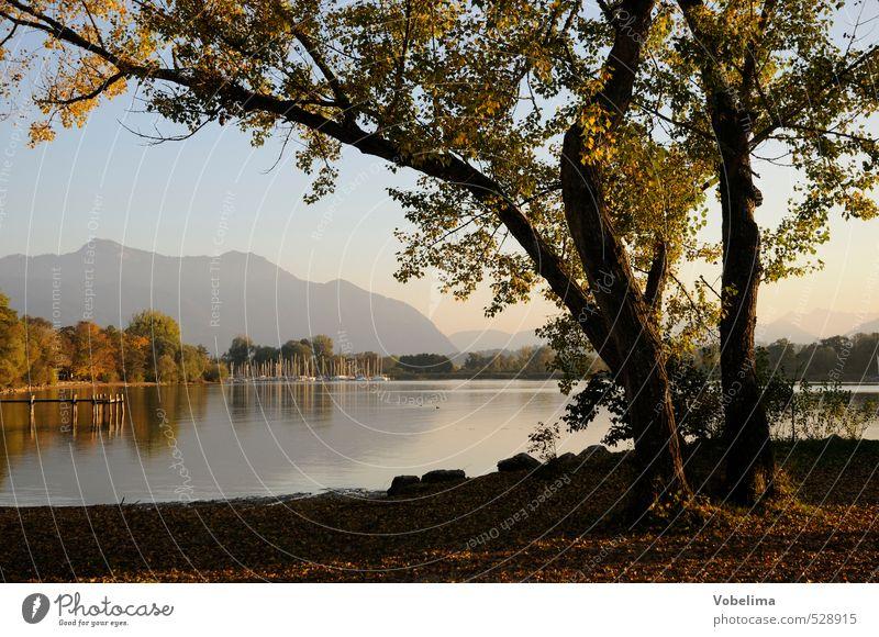Ufer des Chiemsees Natur blau grün Wasser Baum Einsamkeit schwarz Berge u. Gebirge Herbst See braun rosa Schönes Wetter Gipfel Alpen Seeufer