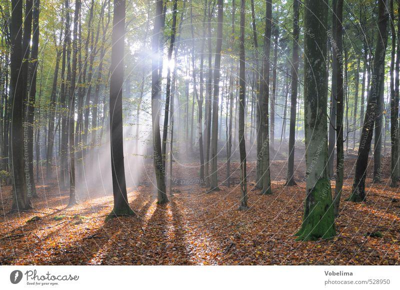 Sonnenstrahlen im Wald Natur Landschaft Sonnenlicht Herbst Nebel Baum blau braun grün weiß Stimmung Hoffnung Glaube Traurigkeit Lichtstrahl sonnig herbstlich
