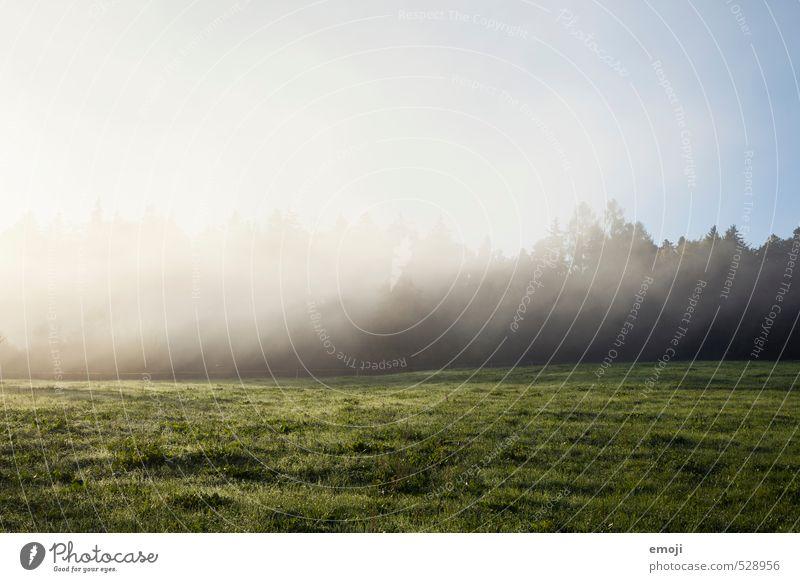 Nebelschleier Natur Landschaft kalt Umwelt Herbst natürlich Feld Schönes Wetter