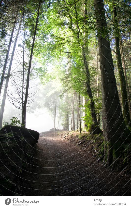 ins Licht Natur grün Baum Landschaft Wald Umwelt natürlich Nebel