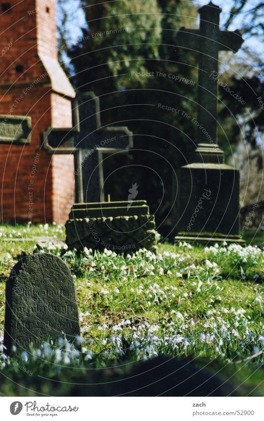 Friedhofsglocken Grab Schneeglöckchen Blume Grabstein töten Beerdigung Sarg Trauer Verzweiflung Vergänglichkeit Tod Religion & Glaube Rücken letzte ruhe Frieden