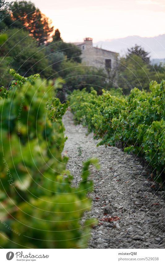 French Style XXXI Kunst ästhetisch Zufriedenheit Weingut Frankreich Provence Weinberg Weinbau Landschaft Farbfoto Gedeckte Farben Außenaufnahme Nahaufnahme