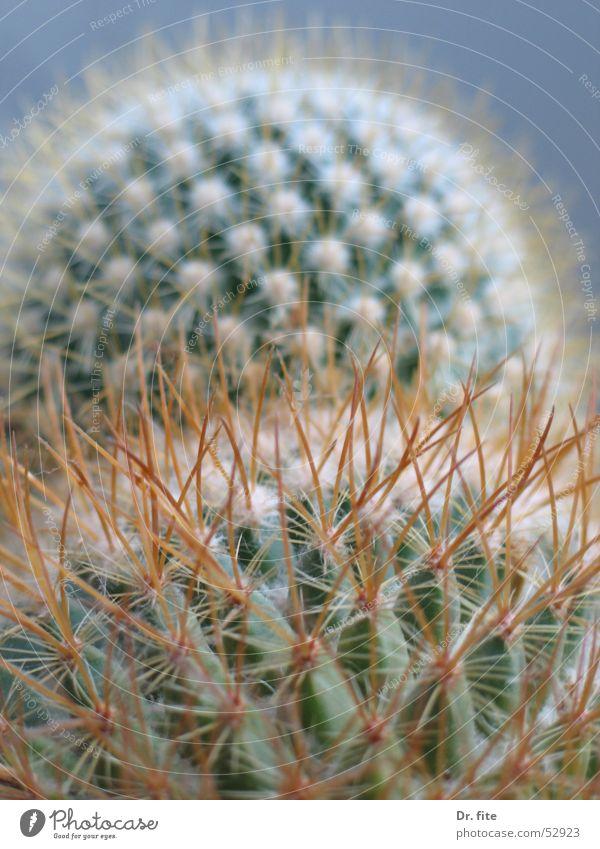 Dornenlandschaft Berge u. Gebirge Hügel Kaktus Stachel