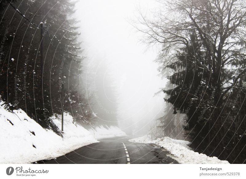 Winter Wald kalt Berge u. Gebirge Straße Schnee Nebel 50 handhaben Serpentinen Geschwindigkeitsbegrenzung Orientierungszeichen Bodennebel
