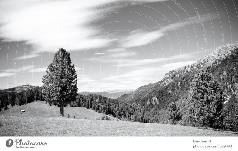 Pflanze | Baum Sommer Sommerurlaub Wiese Wald Alpen Berge u. Gebirge Gipfel Alm stehen eckig gigantisch groß Unendlichkeit hoch rund weich grau schwarz weiß