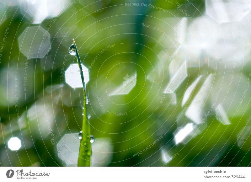 Pflanze | standhaft Umwelt Natur Urelemente Wasser Wassertropfen Herbst Gras Grünpflanze Wiese leuchten nass grün weiß Stimmung rein stagnierend Wachstum