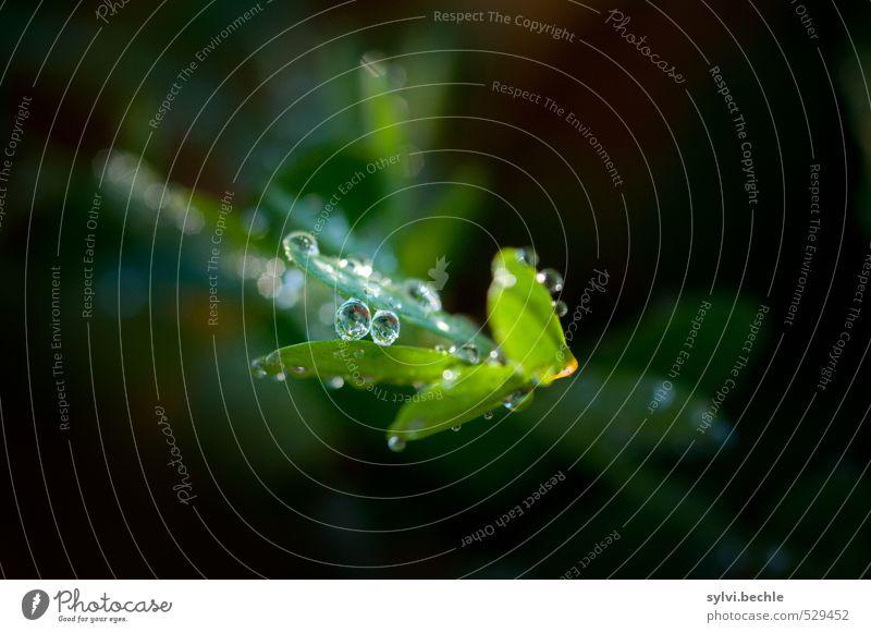 Pflanze | eine Perle der Natur Umwelt Urelemente Wasser Wassertropfen Herbst Klima Klimawandel Gras Sträucher Blatt Grünpflanze Wiese Gesundheit klein grün