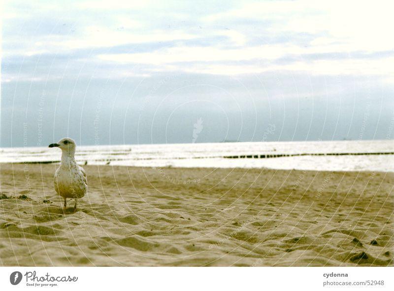 Meer sehn in Farbe Strand Eindruck Ferien & Urlaub & Reisen Stimmung Küste Vogel Ostsee Himmel Landschaft möve Ausflug