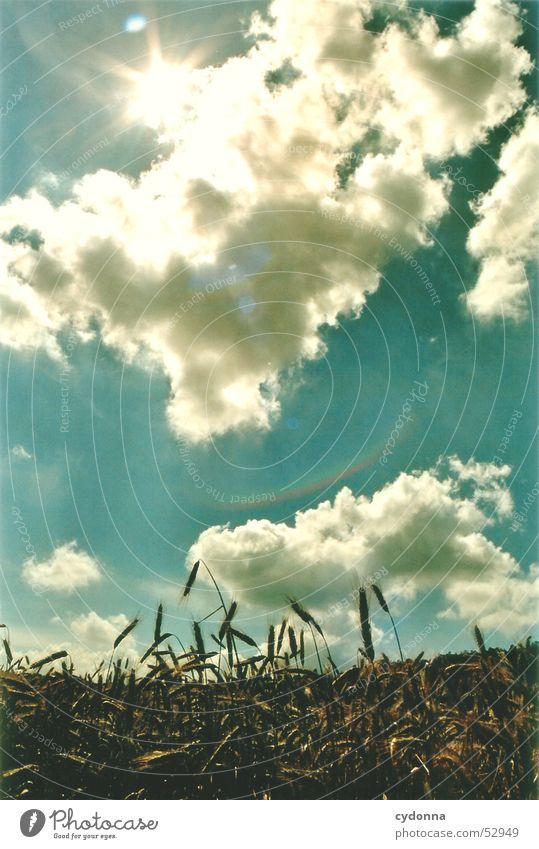 Sommerbrise Himmel Sonne Wolken Wärme Landschaft Feld Physik Eindruck Himmelskörper & Weltall