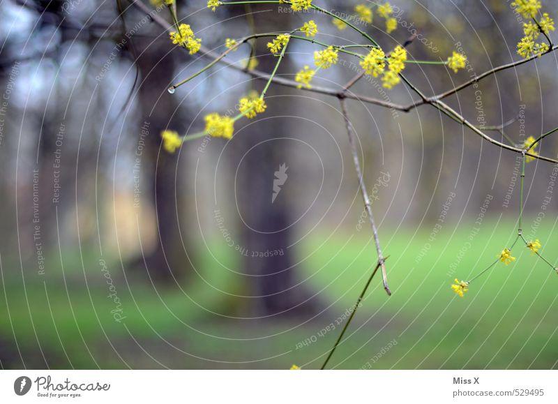Frühling II Umwelt Natur Pflanze Baum Blüte Park Wiese Wald Blühend gelb Frühblüher Frühlingstag zartes Grün Wachstum Trieb Ast Zweige u. Äste Farbfoto