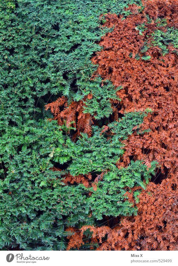 Sommer - Herbst grün Farbe Pflanze lustig Garten braun Sträucher Ast durcheinander herbstlich Herbstfärbung Herbstbeginn Hecke Zweige u. Äste
