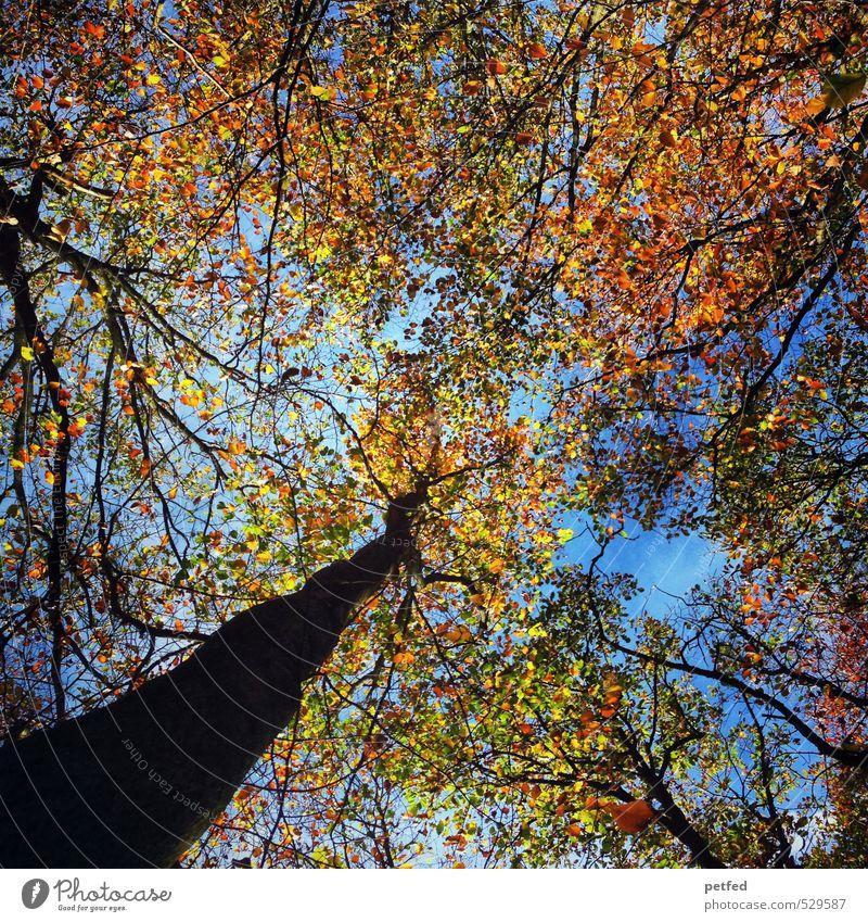 H E R B S T ! Natur Himmel Herbst Schönes Wetter Baum Blatt Wald Bewegung fallen verblüht dehydrieren Freundlichkeit groß nachhaltig schön blau braun mehrfarbig