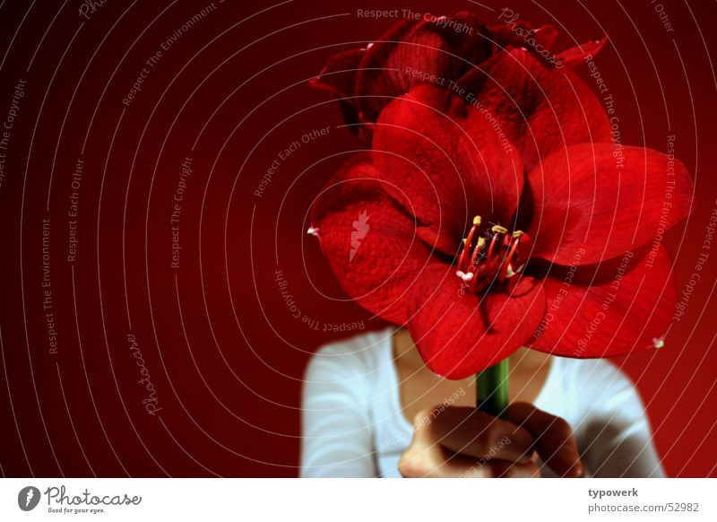 Nur für Dich ... Hand weiß Blume rot Freude Geburtstag Geschenk Jeanshose Tapete Stengel festhalten geben Jubiläum schenken