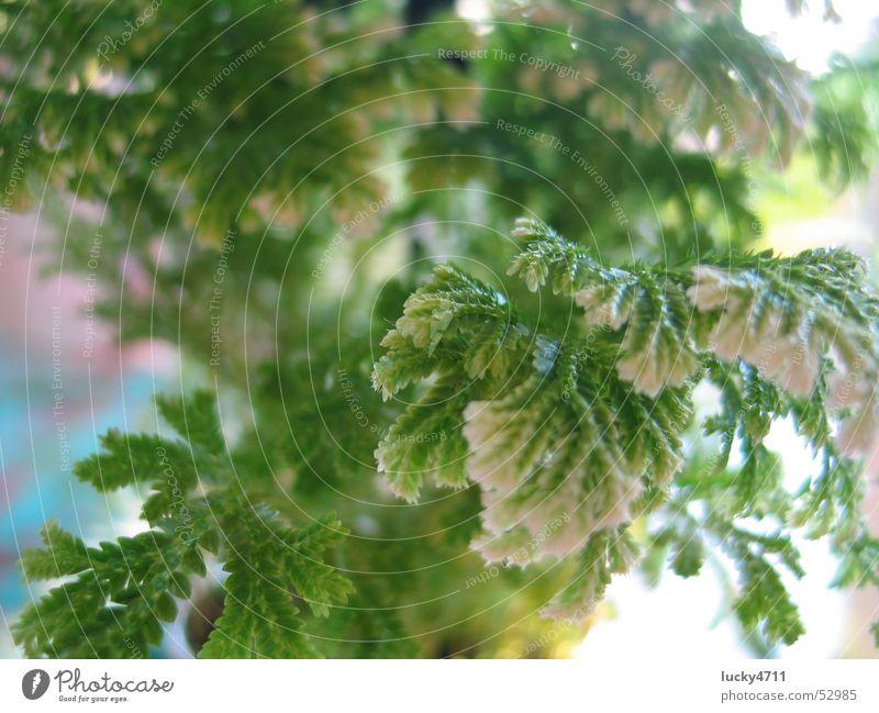 Farn zum träumen Baum Blume grün Pflanze Spielen träumen Landschaft Echte Farne