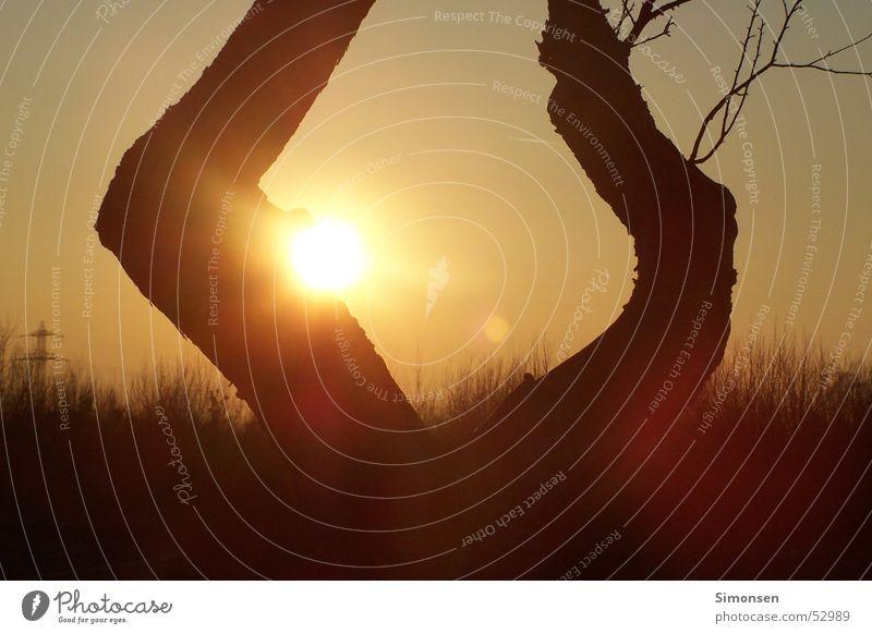 Sonnenspiel Himmel Baum Sonne Wald Ast Fußweg Baumstamm Strommast Zweig Warme Farbe