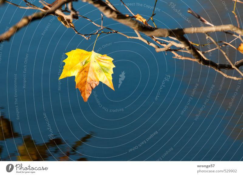 Herbstmotiv Natur Pflanze Wasser Baum Blatt Laubbaum Platane Teich blau mehrfarbig gelb Herbstlaub herbstlich Teichufer Uferbaum Farbfoto Außenaufnahme
