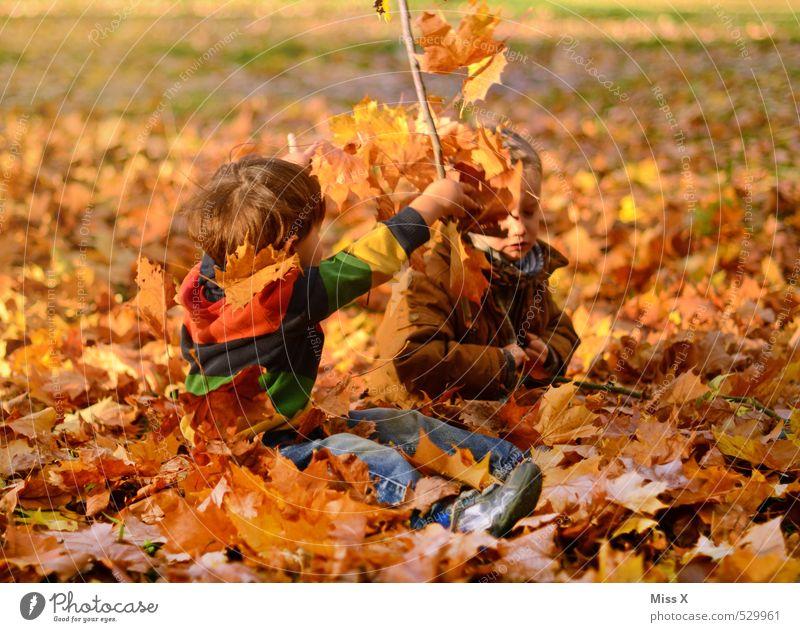Kinder Mensch Natur Freude Blatt Gefühle Herbst Junge lustig Spielen Garten Freundschaft Stimmung Zusammensein Park maskulin