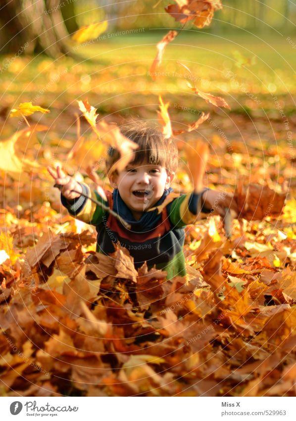 Kind im Laub Mensch Baum Freude Blatt Wald Gefühle Herbst Junge lustig Spielen lachen Garten Stimmung Park Kindheit