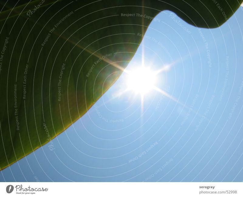Sonne, Blatt, Himmel Palme Palmenwedel