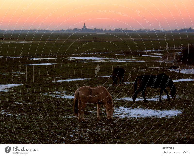 Blick auf Nes aan de Amstel, Holland Niederlande Pferd Dorf Winter Abend