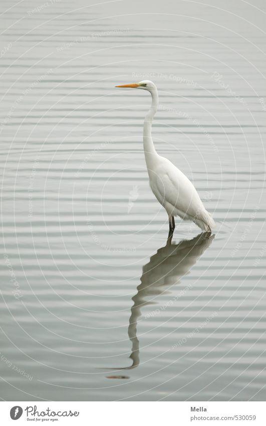 Ey, mach nicht so ne Welle! Umwelt Natur Landschaft Wasser Wellen Seeufer Teich Tier Wildtier Vogel Reiher Silberreiher 1 Blick stehen natürlich grau Wellenform