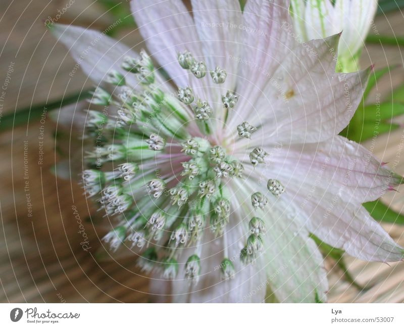 blumenschnappschuss... Blume Blüte Sträucher Pflanze Wiese Sommer Momentaufnahme rosa grün Holz filigran geschmackvoll Natur