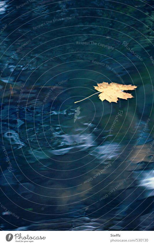 Novemberbild Natur Wasser Herbst Blatt Herbstlaub Ahornblatt schön blau gelb Stimmung Sehnsucht Einsamkeit Novemberstimmung Nostalgie Traurigkeit