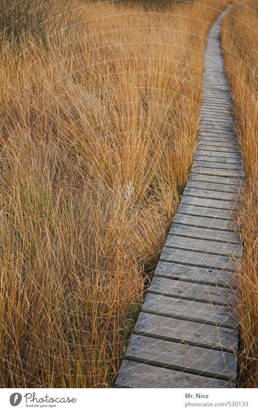 Der Hinweg Ferien & Urlaub & Reisen Ausflug Ferne wandern Umwelt Natur Landschaft Sträucher Moos Moor Sumpf Wege & Pfade ruhig Hohes Venn Steg Wildnis holzsteg