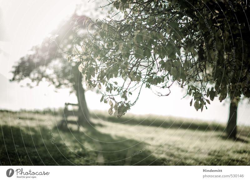 Spätsommergrün Landschaft Sommer Herbst Schönes Wetter Pflanze Baum Blatt Wiese Feld Hügel stehen leuchten Wachstum Unendlichkeit Klischee Wärme grau Glück
