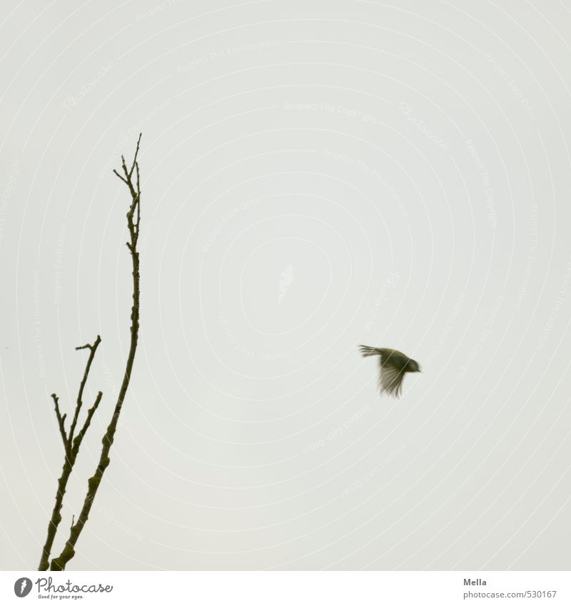 Flieg! Natur Pflanze Baum Tier Umwelt Bewegung Freiheit grau klein natürlich Luft Vogel fliegen trist Wildtier einzeln